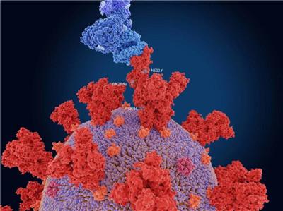 为疫情反扑做好准备!全球防疫成效显著,难道要因印度功亏一篑?图2