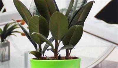 家里养上6种植物,吸收二手烟、灰尘,净化空气保健康!图2