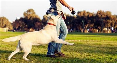 宠物狗需要主人的爱抚,主要是以按摩的方式来进行图1