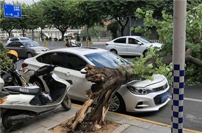 车辆交保险需要提供哪些证件,交强险一定要买吗图2