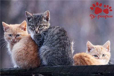家有多猫怎么样促进之间和谐相处?