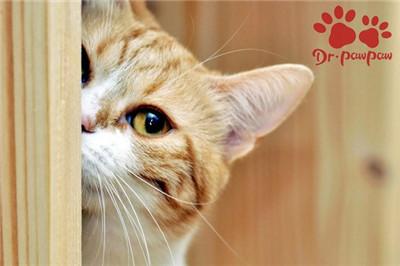 家有多猫怎么样促进之间和谐相处?图2