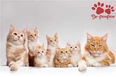 家有多猫怎么样促进之间和谐相处?图3
